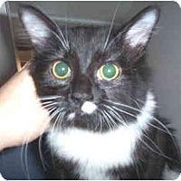 Adopt A Pet :: Bootsie - Scottsdale, AZ
