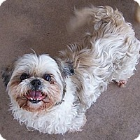 Adopt A Pet :: Shelby - San Angelo, TX