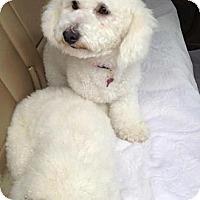 Adopt A Pet :: Jill - Rancho Mirage, CA