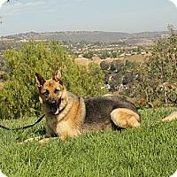 Adopt A Pet :: Kent - Laguna Niguel, CA