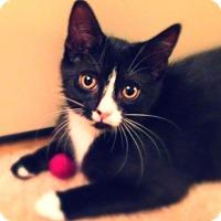 Adopt A Pet :: Rugio - Green Bay, WI