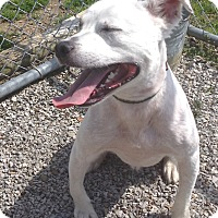 Adopt A Pet :: Snowball - RESCUED! - Zanesville, OH