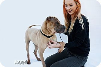 Shar Pei Dog for adoption in Apple Valley, California - Ace - pending