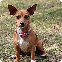 Adopt A Pet :: Roxanne - Bowie, MD