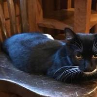 Adopt A Pet :: Anne (Marilla) - McDonough, GA