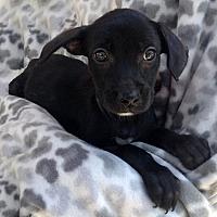 Adopt A Pet :: Babbitt - San Diego, CA