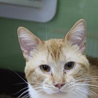Adopt A Pet :: garfield - Muskegon, MI