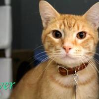 Adopt A Pet :: Oliver - Bradenton, FL