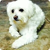 Adopt A Pet :: Queen Daisy - Glastonbury, CT