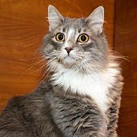 Adopt A Pet :: Tisha (& Trixie) - Herndon, VA