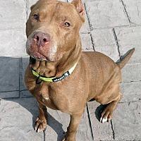 Adopt A Pet :: Dory - Detroit, MI
