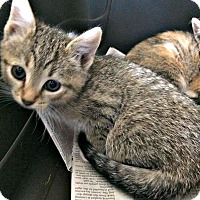 Adopt A Pet :: Janet - Jefferson, NC