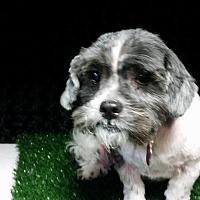 Adopt A Pet :: Sparky West - Urbana, OH