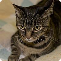 Adopt A Pet :: Zeva - Medina, OH