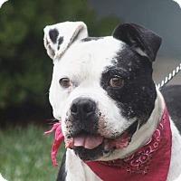 Adopt A Pet :: ROSIE - Poway, CA