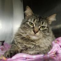 Adopt A Pet :: Cruella - Wellsville, NY