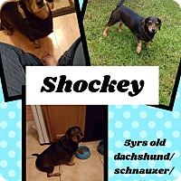 Adopt A Pet :: Shockey - Bogalusa, LA