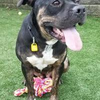 Adopt A Pet :: Queenie - Cleveland, OH