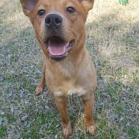 Adopt A Pet :: Sadie Jo - Woodstock, GA