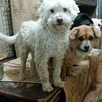 Adopt A Pet :: Doby - Oakton, VA