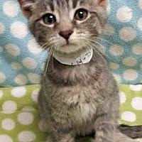 Adopt A Pet :: Citris - Gahanna, OH