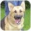 Photo 1 - German Shepherd Dog Dog for adoption in Pike Road, Alabama - Jason