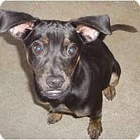 Adopt A Pet :: Tyson - Winter Haven, FL