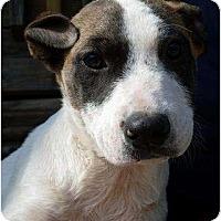Adopt A Pet :: Ethel - Harrison, AR