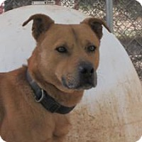 Adopt A Pet :: Frasier - Las Cruces, NM
