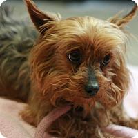 Adopt A Pet :: Summer - Canoga Park, CA