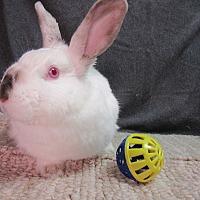 Adopt A Pet :: Bridgette - Newport, DE