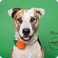 Adopt A Pet :: Phoenix - Visalia, CA