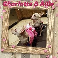 Adopt A Pet :: Charlotte & Allie (pair) - Anaheim, CA