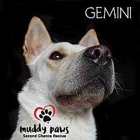 Adopt A Pet :: Gemini - Council Bluffs, IA