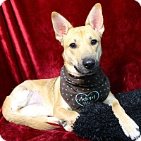 Adopt A Pet :: Gia II-pending adoption - East Hartford, CT