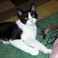 Adopt A Pet :: Nacho Millet - Edmonton, AB