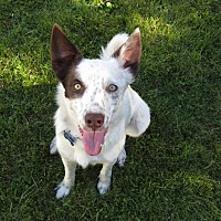 Adopt A Pet :: CYPRESS - Nampa, ID