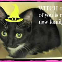 Adopt A Pet :: CoCo - Winfield, KS