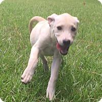 Adopt A Pet :: Tonya (has been adopted) - Burlington, VT