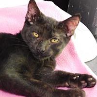 Adopt A Pet :: Coalton - Davis, CA