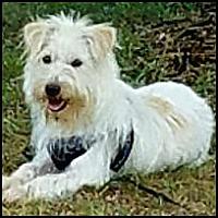 Adopt A Pet :: Charlie - Winder, GA