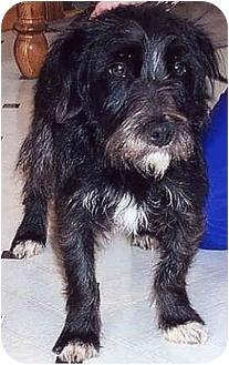 Terrier (Unknown Type, Small) Mix Dog for adoption in Owatonna, Minnesota - Bell