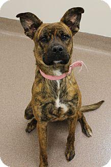Terrier (Unknown Type, Medium) Mix Dog for adoption in Chambersburg, Pennsylvania - Trixie
