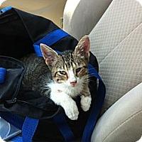 Adopt A Pet :: Uno - Baton Rouge, LA