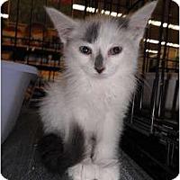 Adopt A Pet :: Smudge - Warren, MI