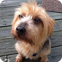 Adopt A Pet :: Taz - Woodbridge, VA