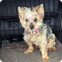 Adopt A Pet :: Sophia - Tallahassee, FL