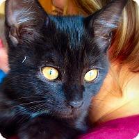 Adopt A Pet :: Evening - Green Bay, WI