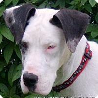 Adopt A Pet :: Felina - Bethel, OH
