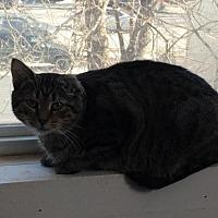Adopt A Pet :: zz 'Molly' courtesy listing URGENT! - Cincinnati, OH